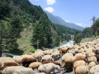 on-the-way-to-pahalgam-7