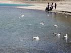 pangong-lake-ladakh-60