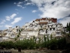thiksey-monastery-and-around-42