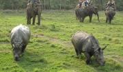chitwan-animals11