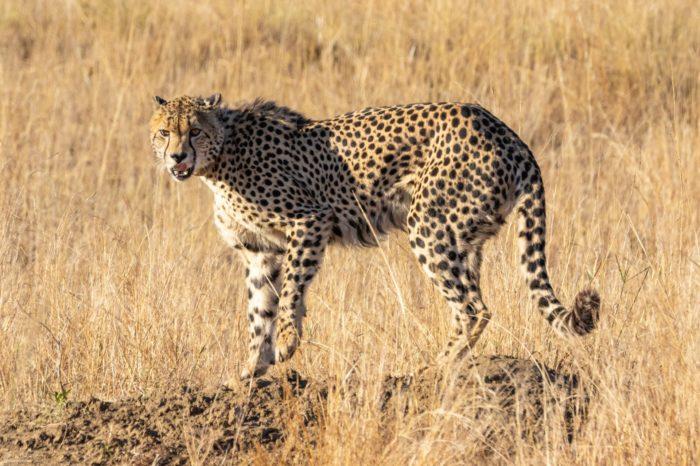 Click Click  Kenya